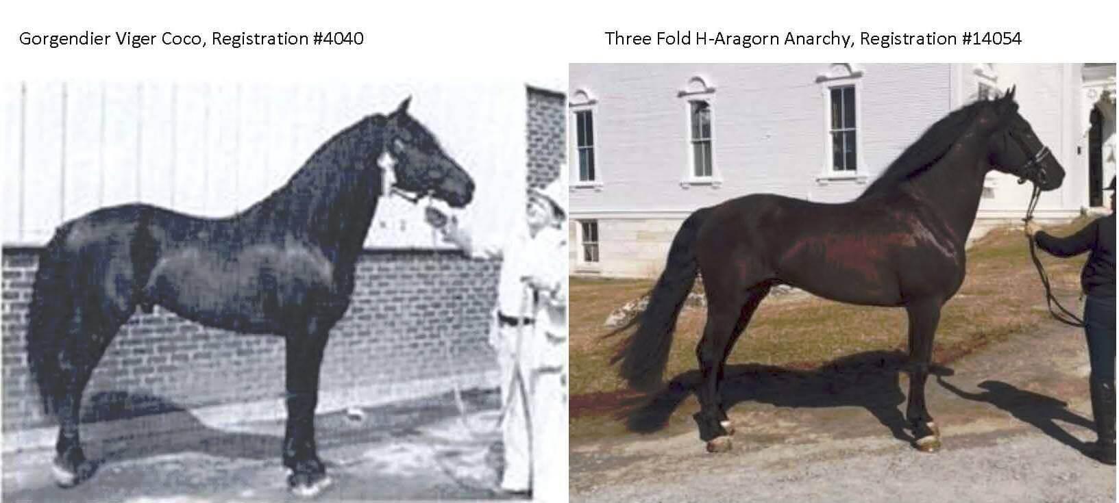 Three Fold H-Aragorn Anarchy
